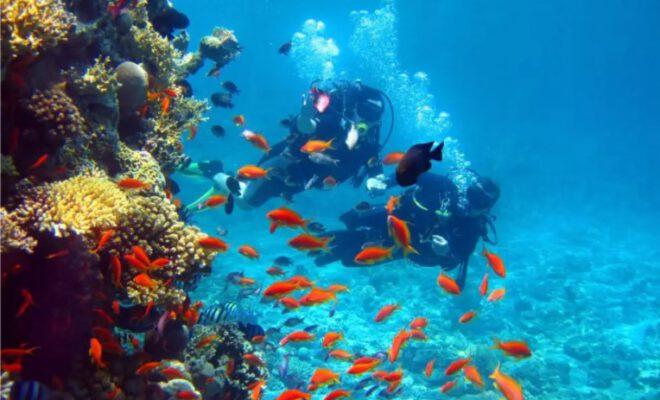Scuba Diving Benefits