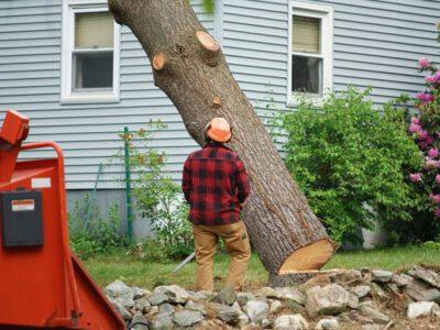 Professional Tree Trimming in Alpharetta GA