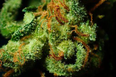 hemp flower benefits